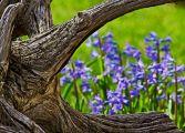 spring in Canada