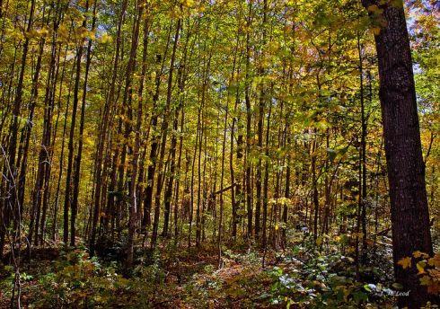 awalkintheforest