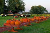 pumpkinfarm