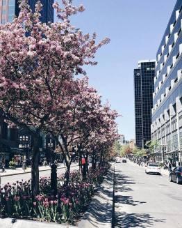McGill Avenue in full bloom photo by astcyr