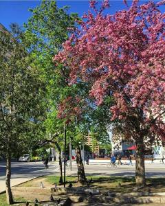 Montreal alive with colour on a very sunny day! imagine_montreal