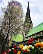 Tulips and architectural contrasts montreal photo bylesleymtl514
